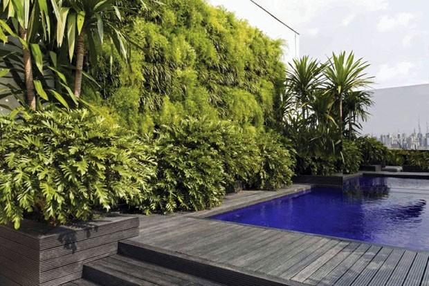 jardim vertical terraco:Jardim vertical na piscina