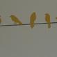 Adesivo - Passarinho no fio